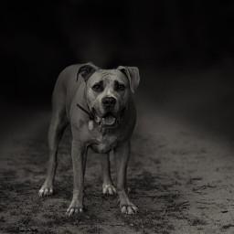 pets pet photooftheday dog mypet