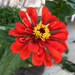 frommygarden redflower seeds grow nature