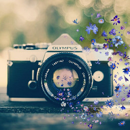 freetoedit colorsplash camera petals