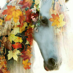 wapautumnvibes colorsplash colorful nature horse