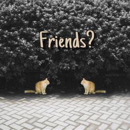 freetoedit reedited friends cats