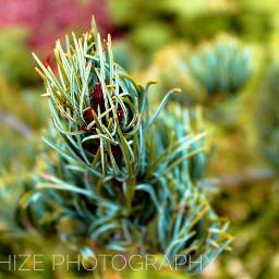 colorful sanchizephotography canonusapro love nature