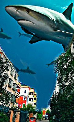 freetoedit sharks