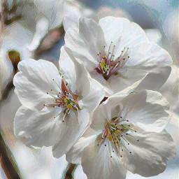 flower tree trees spring springtime freetoedit