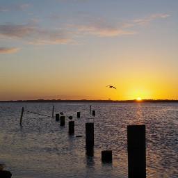beach nature naturephotography sunset bird