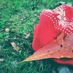 autumn autumnvibes knitcap leaf