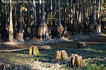 bayoukayaker photography nature