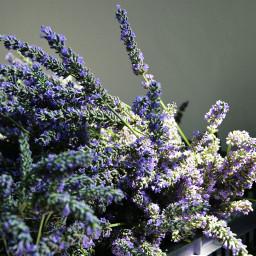 photography emotions flower nature lavander