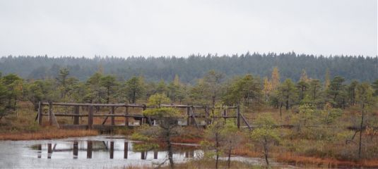 nature swamp autumn cloudyday peace dpcreflections