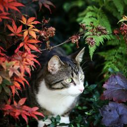 fallinlove mylo autumn cat kitten
