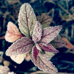 freetoedit naturephotography flowers macro madewithpicsart dpcleaves