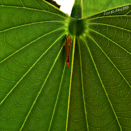 dpcstripes leaf nature photography insect