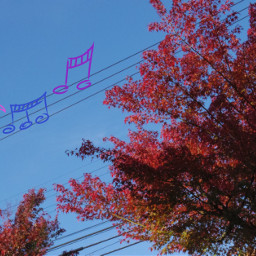 freetoedit autumnleaves japan goodweather sunny