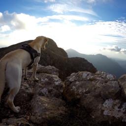 montain nature dog labrador like freetoedit