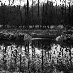 pound trees mirror blackandwhite dark