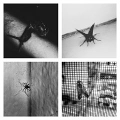 insects horror collage blackandwhite black