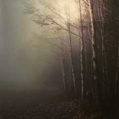 nature forest autumn
