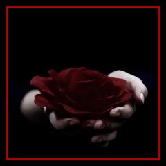 interesting red black rose roses freetoedit